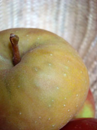 sp-apple-detail-2