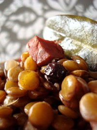 sp-lentil-dish-detail