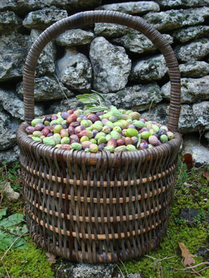 sp-olive-basket