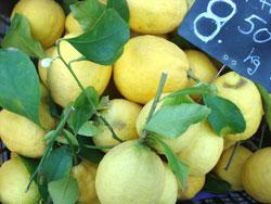 SP-Lemons2