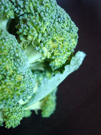 SP-Broccoli