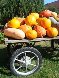 SP-Pumpkins